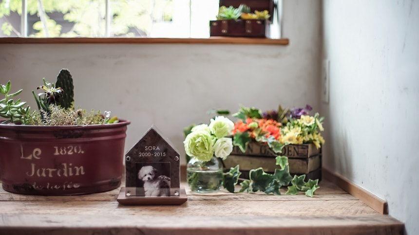 ペットコティと花