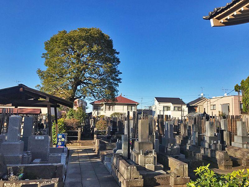下高井戸 龍泉寺墓苑 日当たりがよい墓域