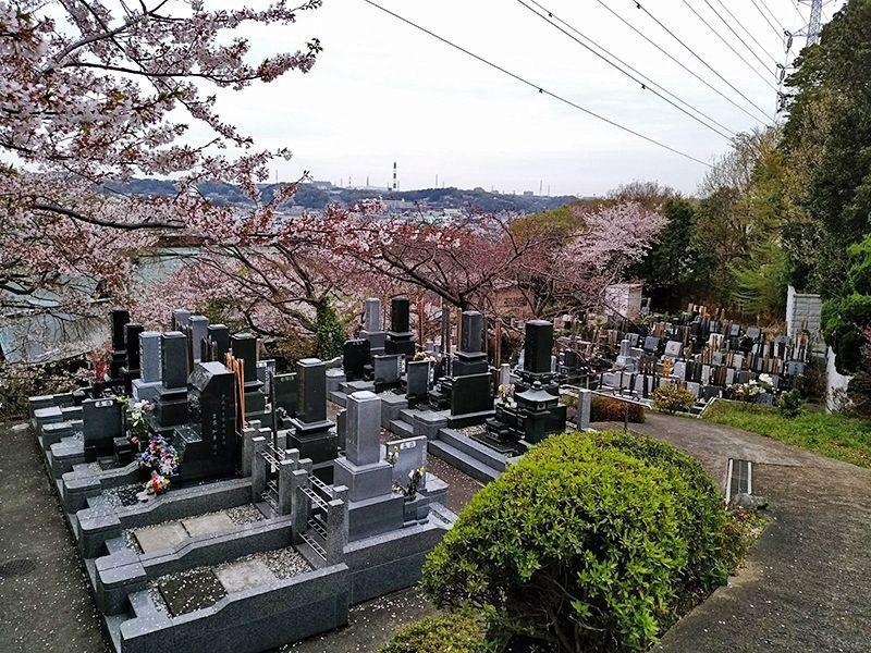 霊園やすらぎの丘 桜咲く墓域
