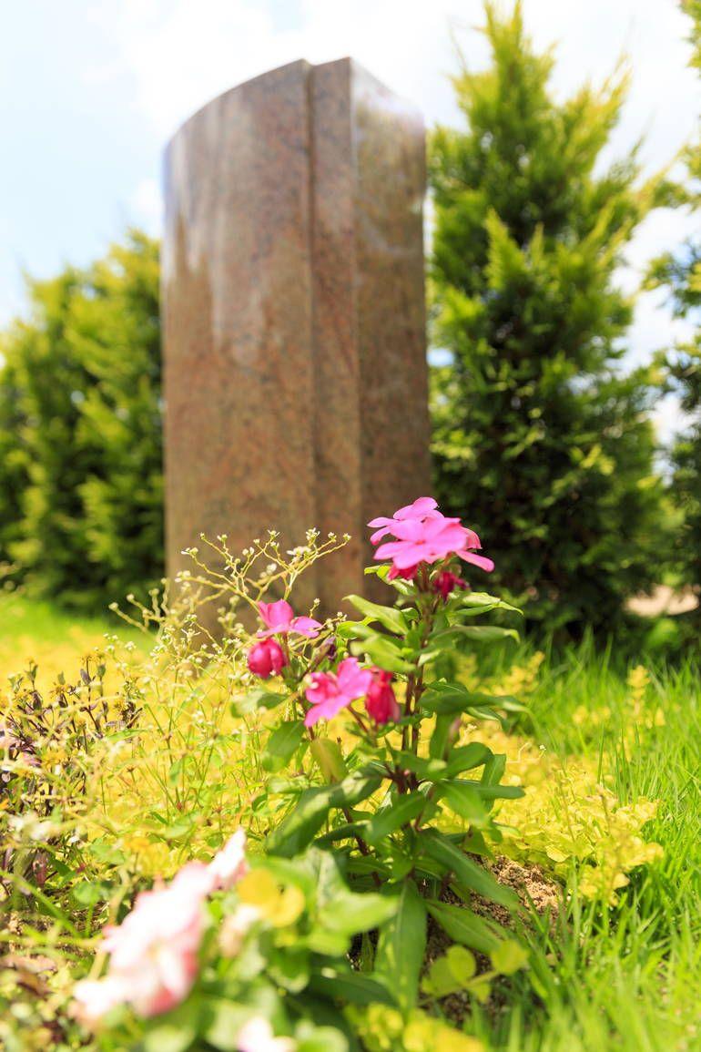 ふれあいの杜 天空 可愛らしい花