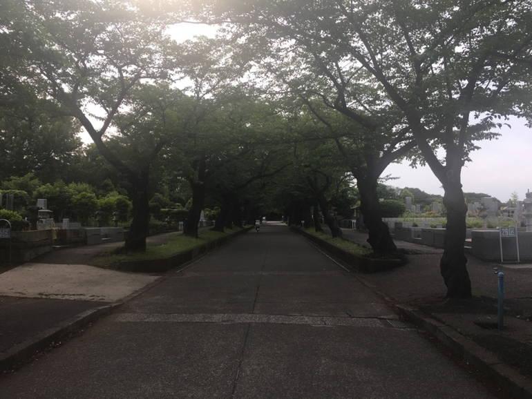 川崎市営 緑ヶ丘霊園 緑豊かな参道
