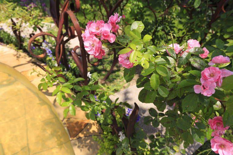 ふれあいの杜 天空 陽の光を浴びる花