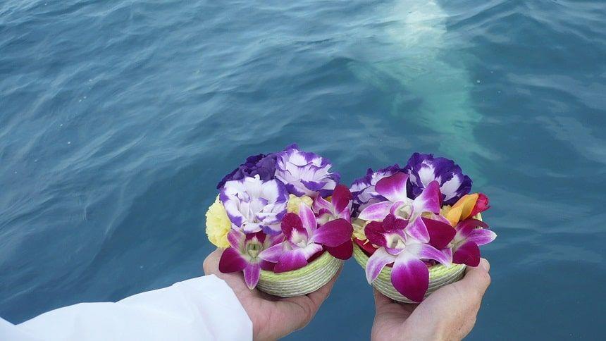 みんなの海洋散骨での献花の花
