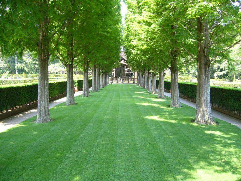 佐倉ふれあいパーク 芝生の参道とメタセコイアの並木道