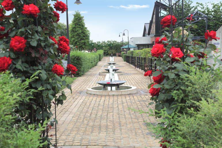 八千代ふれあいパーク バラが美しい霊園風景
