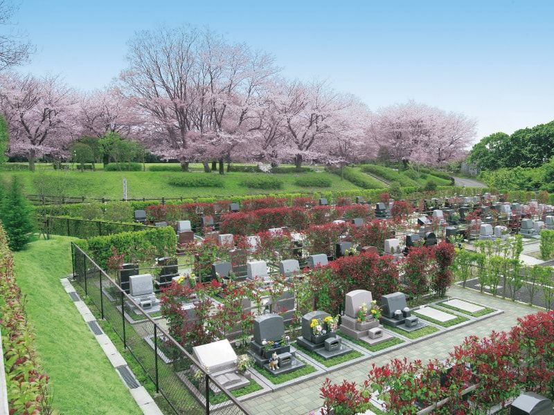 アドミール座間 隣接する芹沢公園の桜