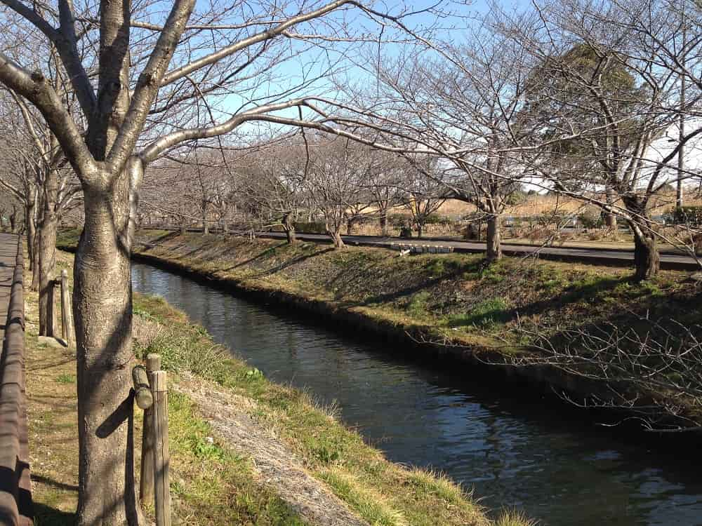 船橋中央メモリアルパーク 周辺にある海老川