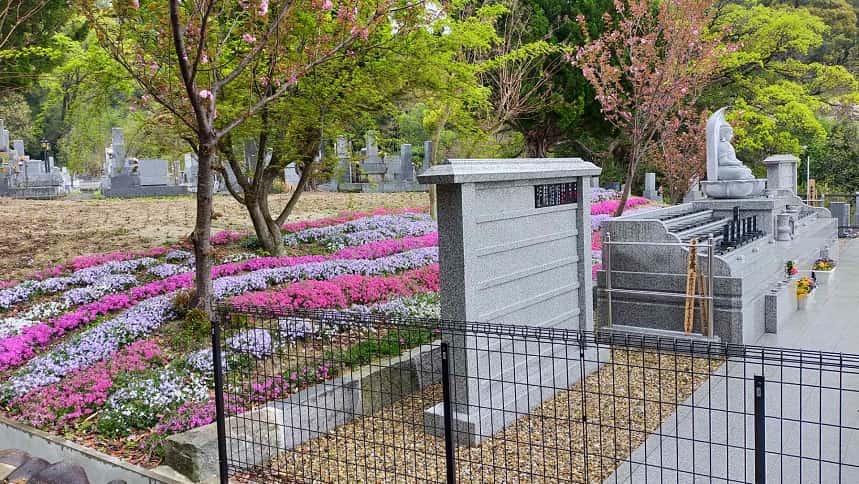 ピンク色の鮮やかな芝桜が咲く大泉寺個別永代供養墓