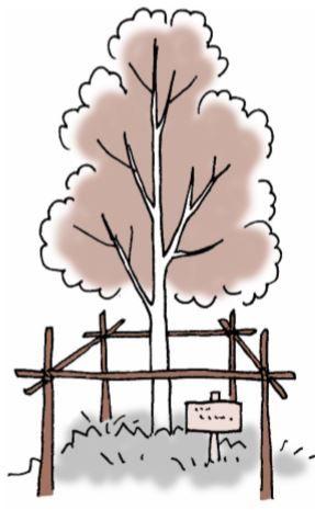 樹木葬のイラスト