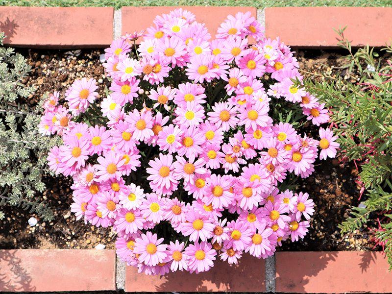サニープレイス所沢 永代供養墓・樹木葬 様々な種類の花が咲き乱れる苑内