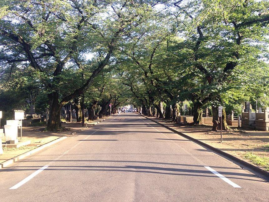 谷中霊園5