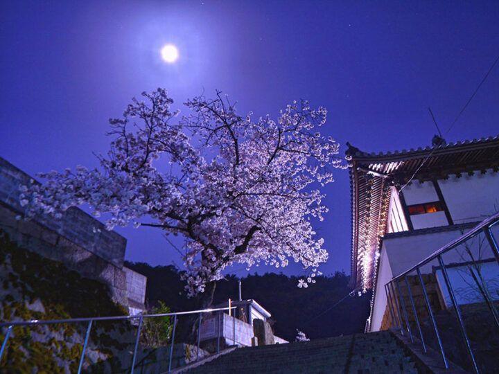 松林寺 のうこつぼ