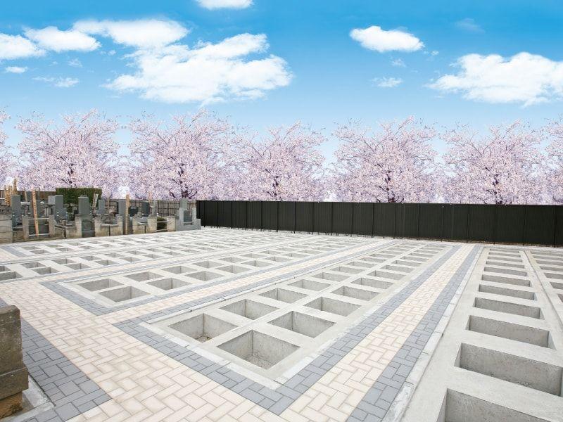 千手院の墓地に桜が咲いている