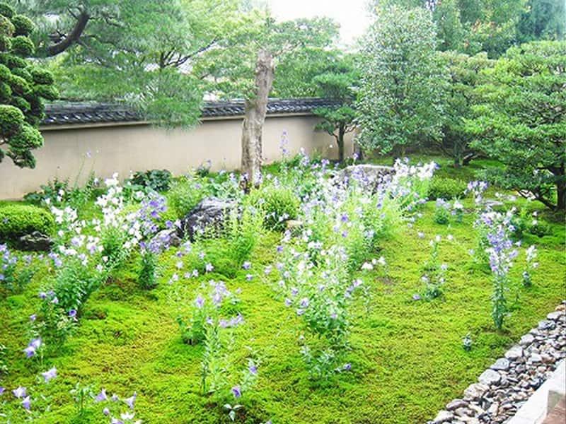 東福寺塔頭天得院内に咲いている花