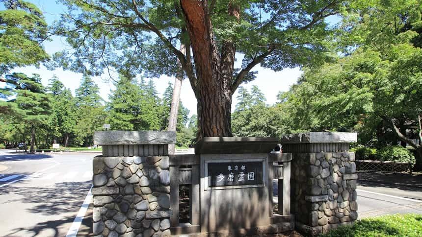 多摩霊園の木