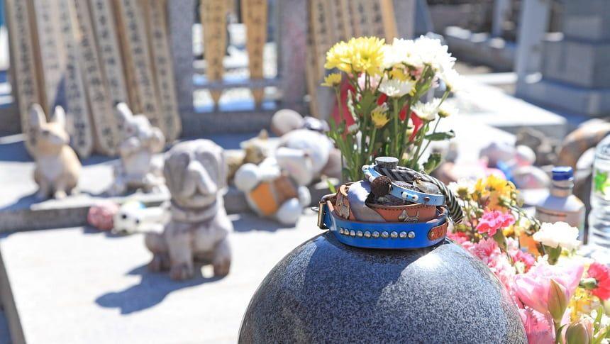 墓地に置かれている首輪が重ねられた骨壷