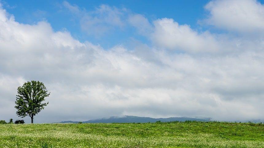 大樹が生えている緑の丘