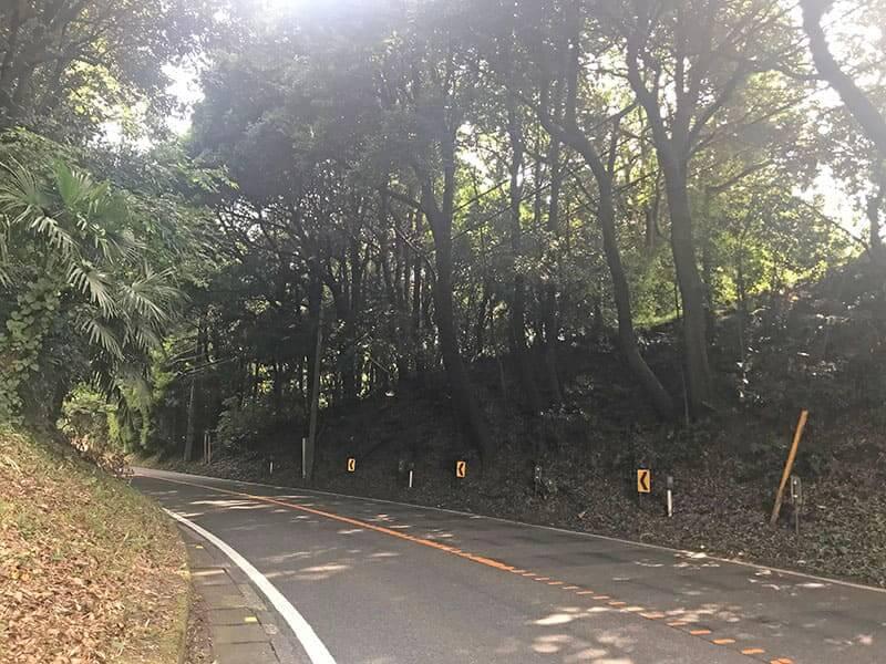 町田いずみ浄苑フォレストパーク近くの林