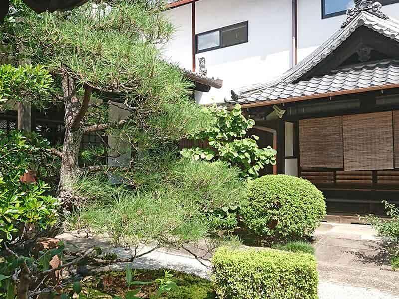 専徳寺本堂と松の木