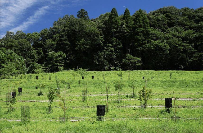 森の墓苑 自生している樹木を植える個別墓