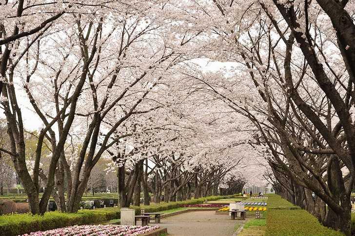 さいたま市営霊園 思い出の里 桜いっぱいの公園墓地