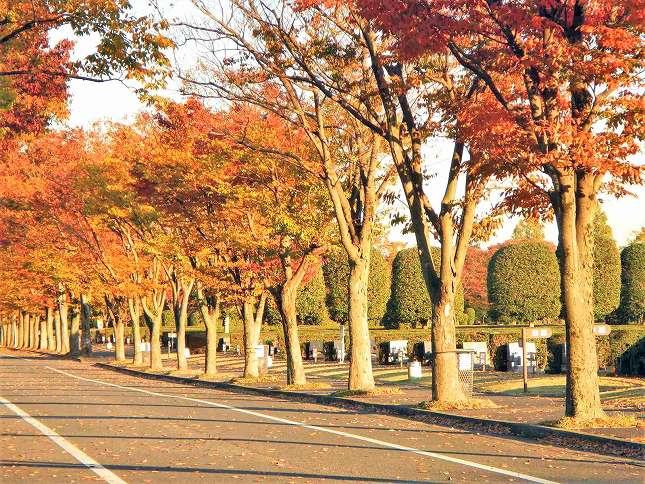 さいたま市営霊園 思い出の里 公園のような墓所風景