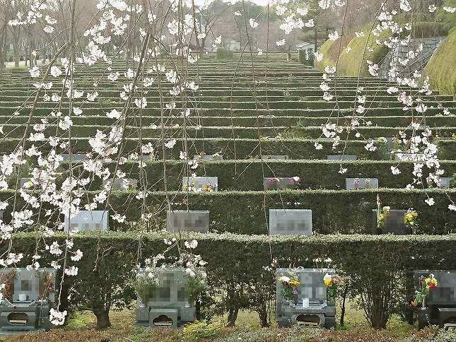 さいたま市営霊園 思い出の里 芝生墓地風景