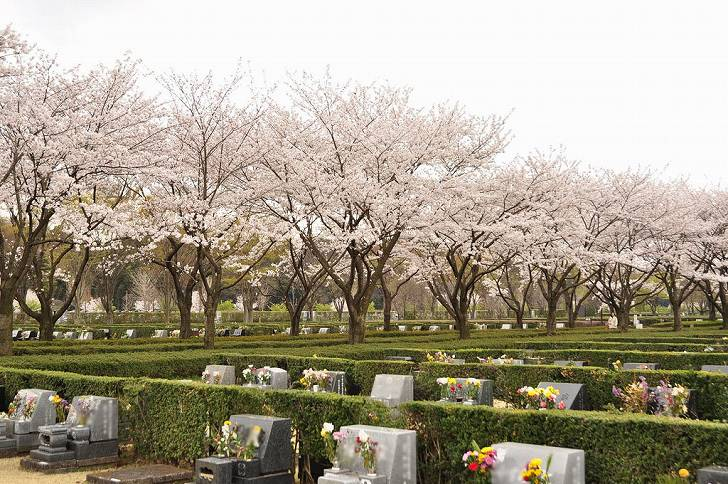 さいたま市営霊園 思い出の里 ピンクと緑のコントラストが美しい園内