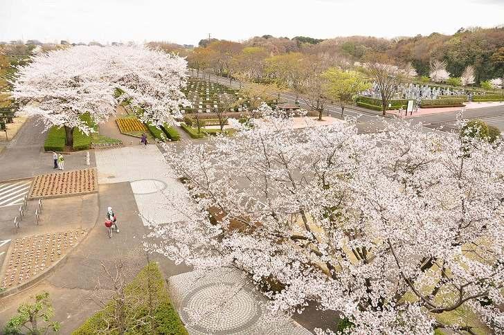 さいたま市営霊園 思い出の里 桜が美しい園内