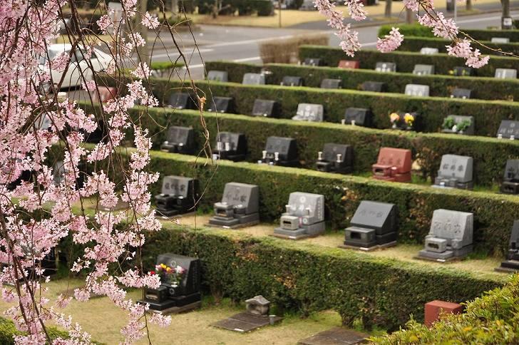 さいたま市営霊園 思い出の里 桜と芝生墓地