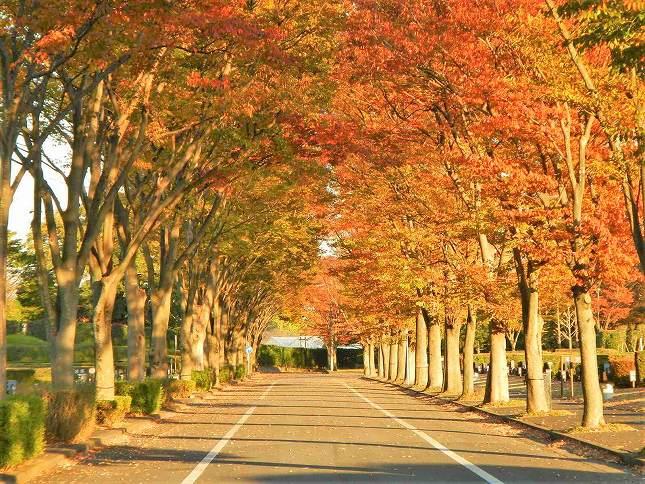 さいたま市営霊園 思い出の里 秋には紅葉が楽しみな園内