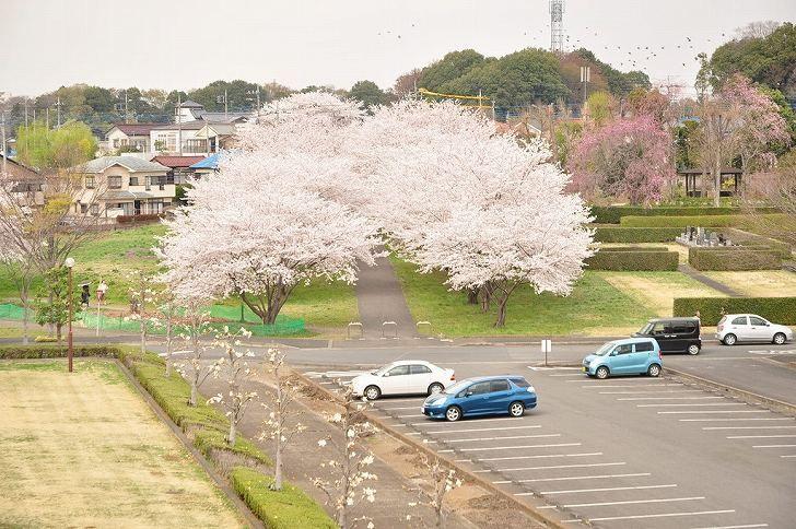 さいたま市営霊園 思い出の里 広大な専用駐車場