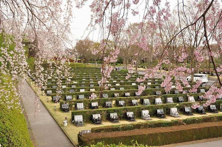 さいたま市営霊園 思い出の里 桜が咲きほこる墓域
