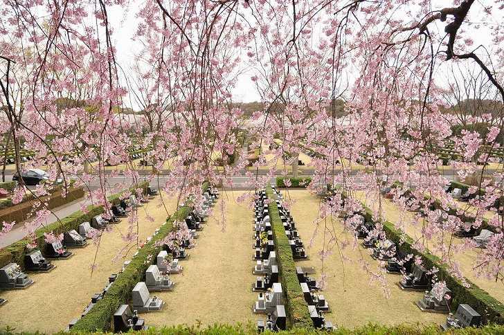 さいたま市営霊園 思い出の里 広い芝生墓地の様子