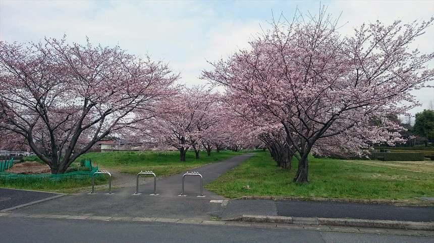 さいたま市営霊園 思い出の里 自然豊かな公園墓地