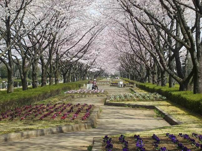 さいたま市営霊園 思い出の里 多様な花が楽しめる園内