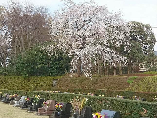 さいたま市営霊園 思い出の里 芝生墓地の様子