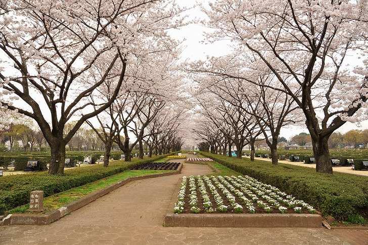 さいたま市営霊園 思い出の里 大型公園墓地の様子