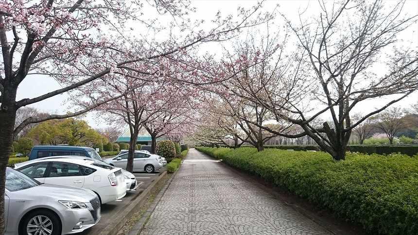 さいたま市営霊園 思い出の里 園内駐車スペース