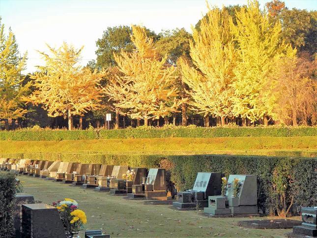 さいたま市営霊園 思い出の里 紅葉が美しい芝生墓地