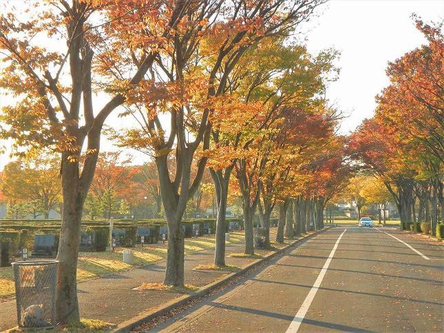 さいたま市営霊園 思い出の里 四季折々の自然が楽しめる園内