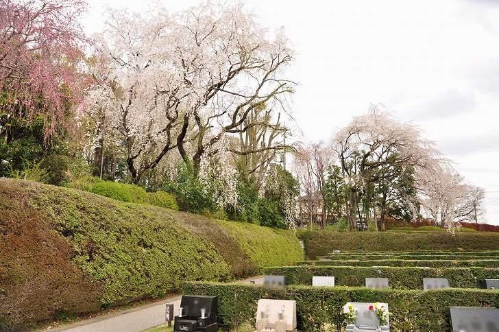 さいたま市営霊園 思い出の里 草花に癒される開放的な空間