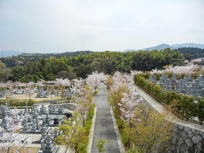 南大阪霊園の墓域と空と桜
