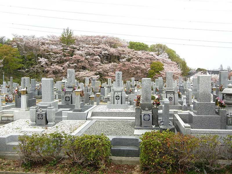 大阪狭山市営 西山霊園 桜が咲く園内