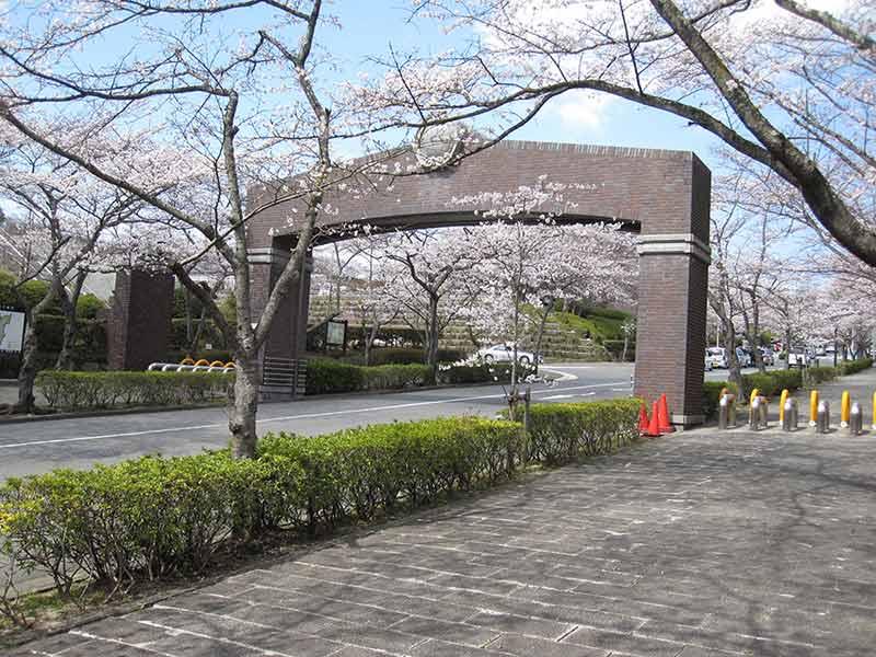 飯盛霊園 桜のトンネル