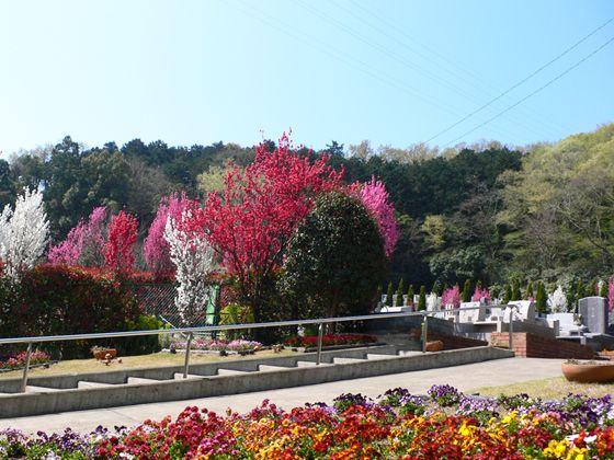 湘南メモリアルガーデン 色とりどりの花が咲く園内
