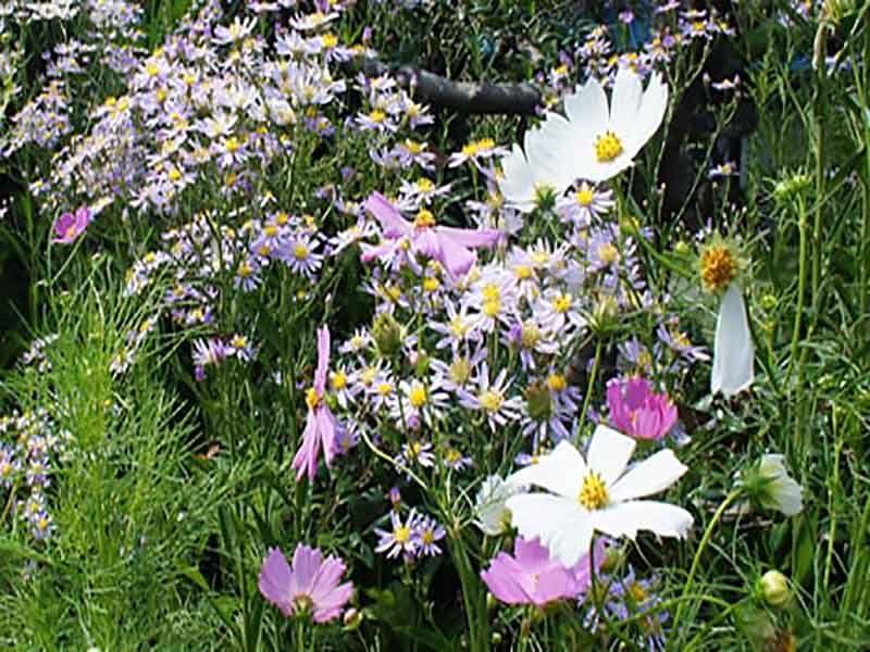 飯盛山仁王院 鎖大師青蓮寺 季節の花が咲き誇る境内風景