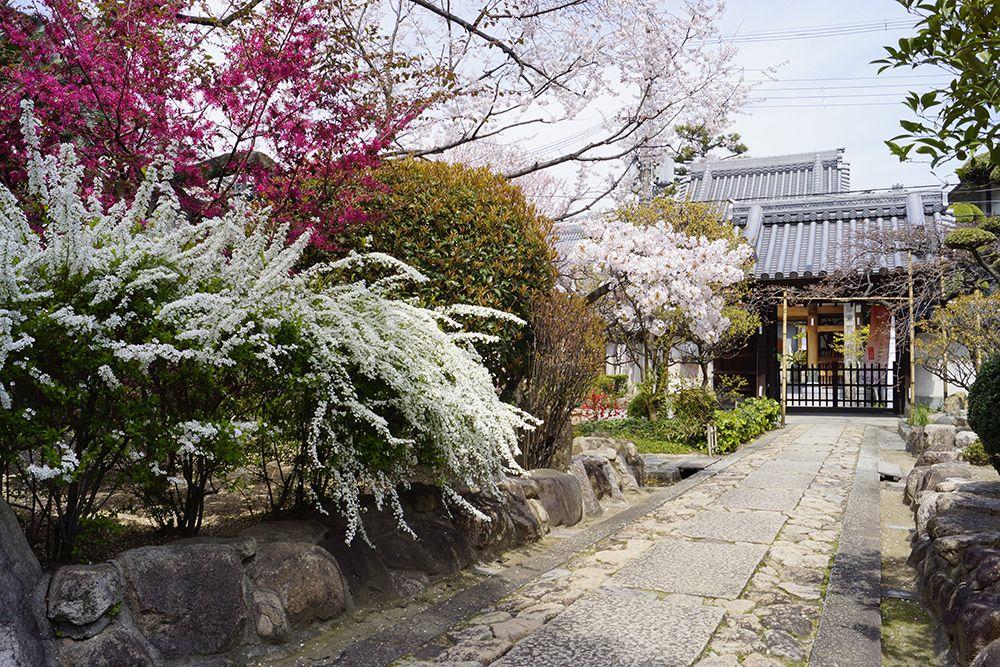 銀山寺墓地 参道沿いに咲き誇る花々
