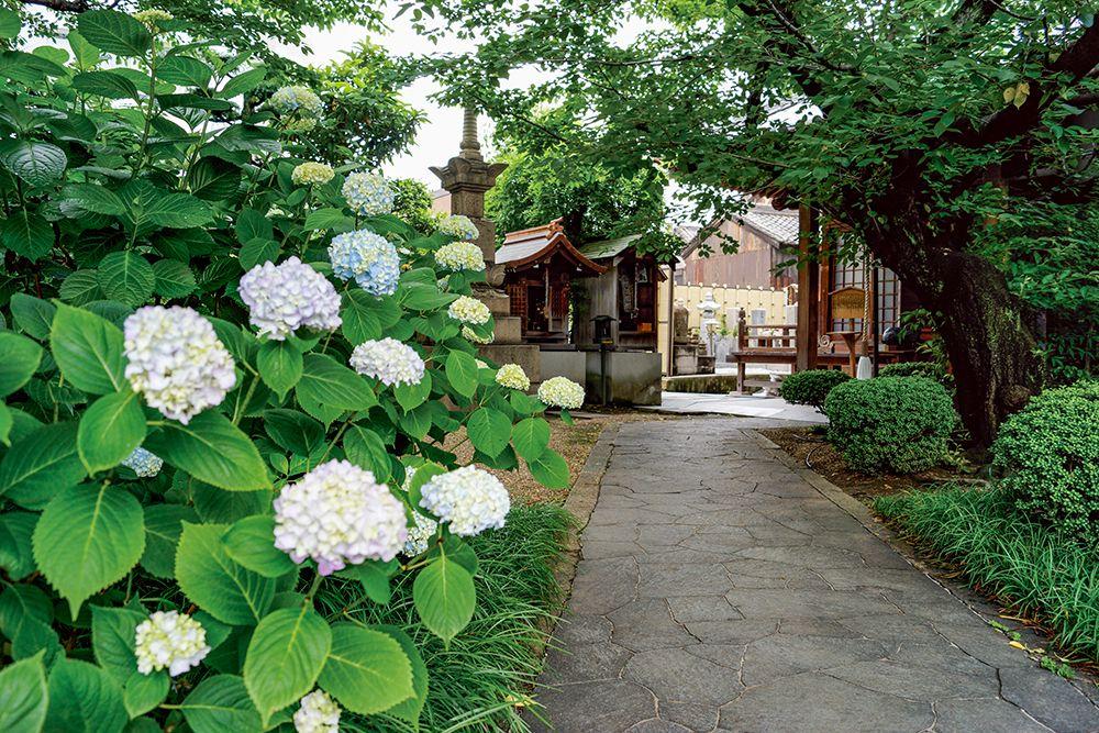 東福寺霊園 参道沿いに咲く紫陽花