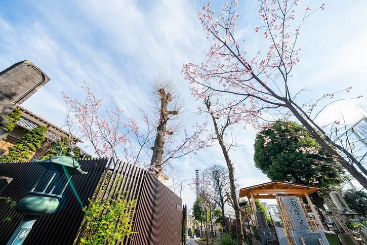 恵光メモリアル新宿浄苑 春に苑内を飾る桜